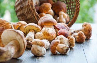 Сонник купувати гриби