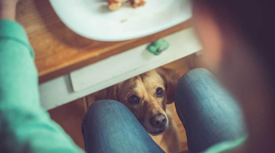 Какие продукты опасны для собак?